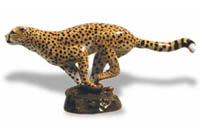 Cheetahhoodiephoto200