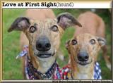 Greyhound calendar160photo