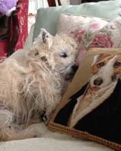 Gilks asleep photo175