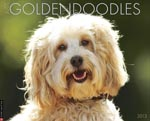 Goldendoodle 175photo